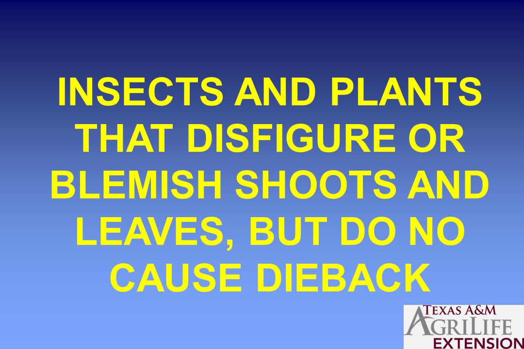 INSECTS AND PLANTS THAT DISFIGURE OR BLEMISH SHOOTS AND LEAVES, BUT DO NO CAUSE DIEBACK