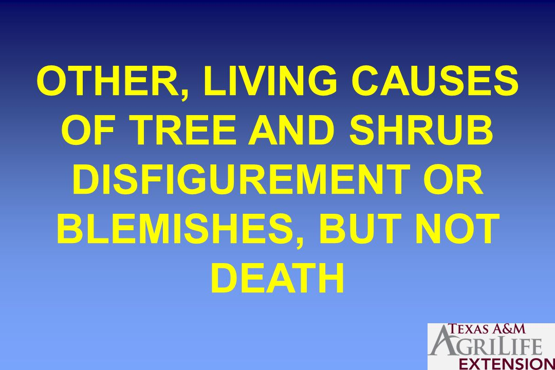 OTHER, LIVING CAUSES OF TREE AND SHRUB DISFIGUREMENT OR BLEMISHES, BUT NOT DEATH