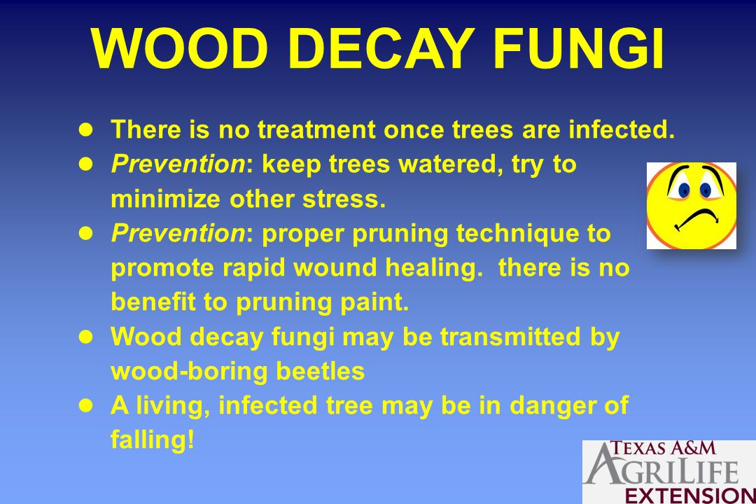 WOOD DECAY FUNGI There is no treatment once trees are infected.