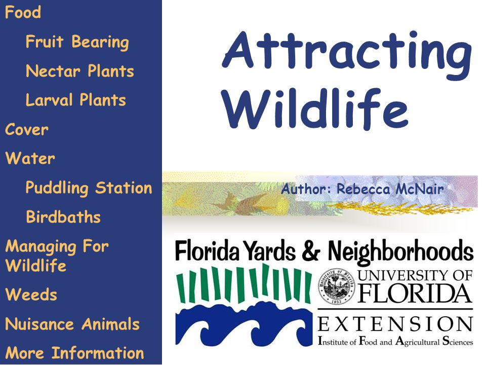 Attracting Wildlife Food Fruit Bearing Nectar Plants Larval Plants Cover Water Puddling Station Birdbaths Managing For Wildlife Weeds Nuisance Animals More Information Author: Rebecca McNair