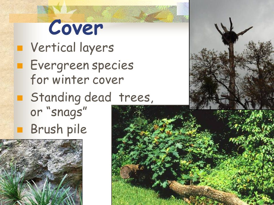 Cover Vertical layers Evergreen species for winter cover Standing dead trees, or snags Brush pile