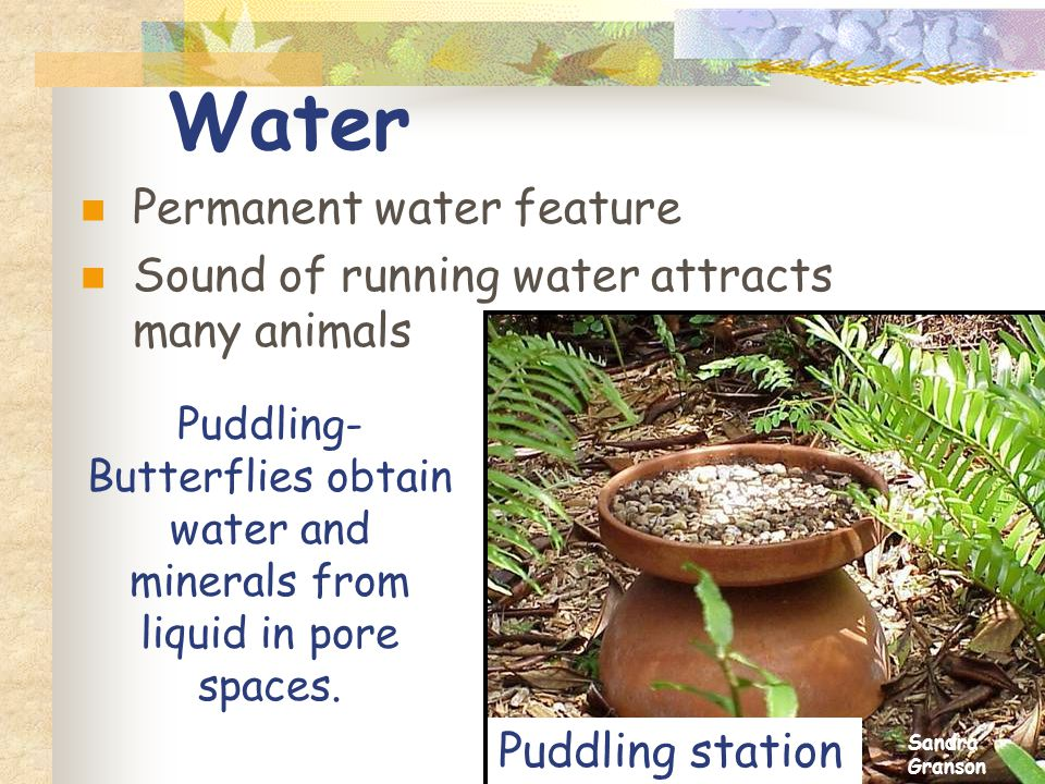 Water Permanent water feature Sound of running water attracts many animals Puddling- Butterflies obtain water and minerals from liquid in pore spaces.