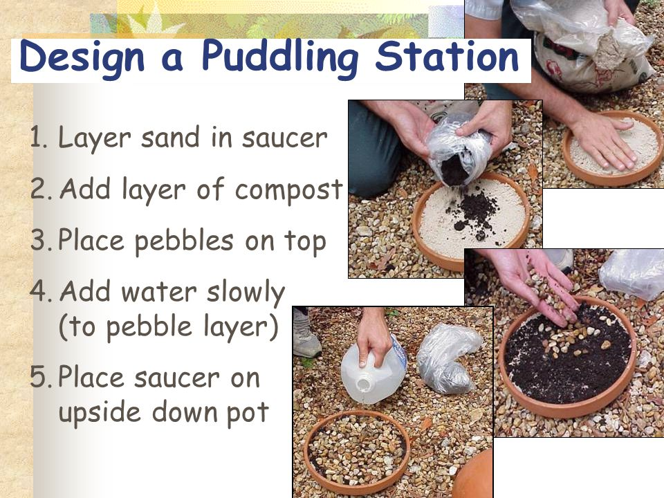 Design a Puddling Station 1.Layer sand in saucer 2.Add layer of compost 3.Place pebbles on top 4.Add water slowly (to pebble layer) 5.Place saucer on upside down pot