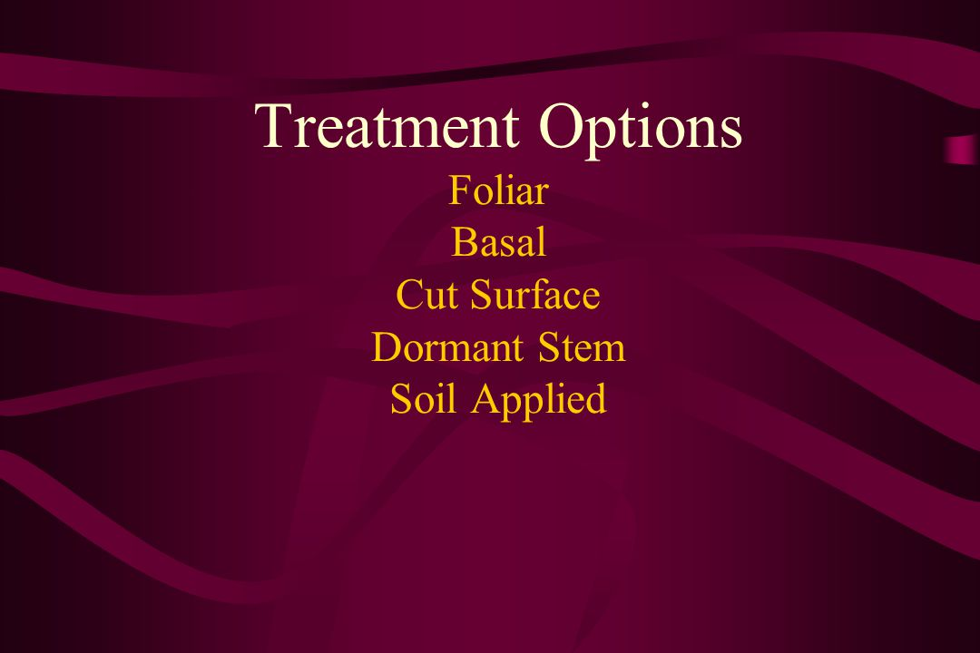 Treatment Options Foliar Basal Cut Surface Dormant Stem Soil Applied