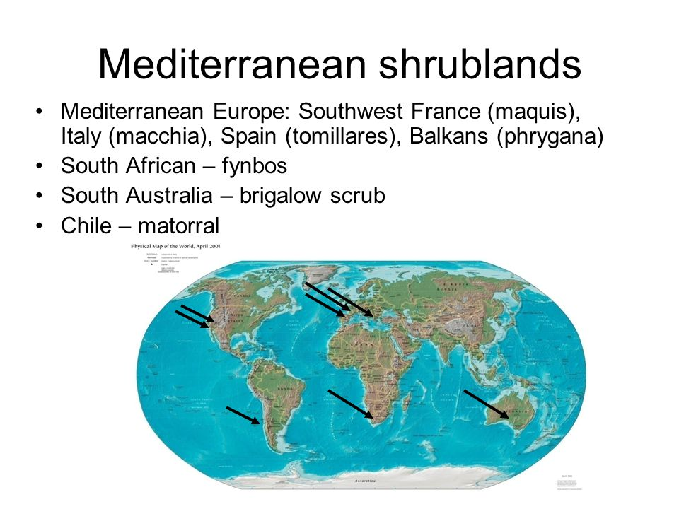 Mediterranean shrublands Mediterranean Europe: Southwest France (maquis), Italy (macchia), Spain (tomillares), Balkans (phrygana) South African – fynbos South Australia – brigalow scrub Chile – matorral