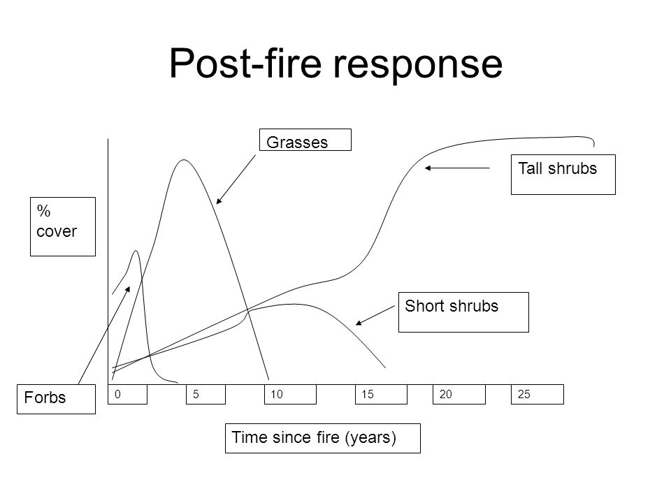 Post-fire response % cover Time since fire (years) 0510152025 Forbs Grasses Short shrubs Tall shrubs