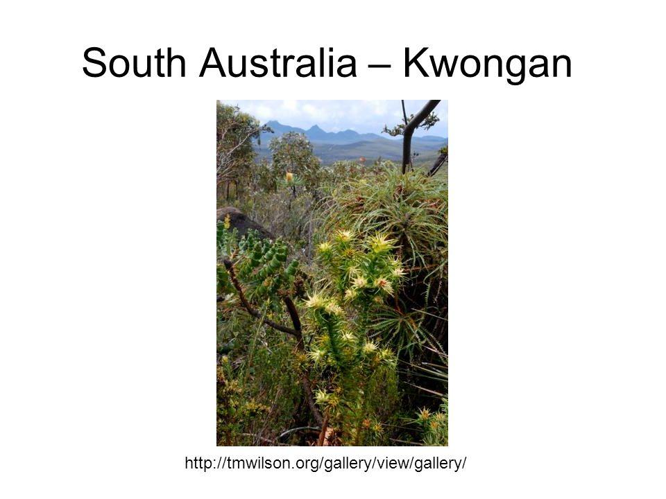 South Australia – Kwongan http://tmwilson.org/gallery/view/gallery/