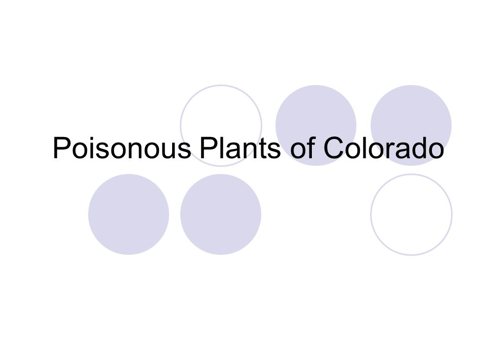 Poisonous Plants of Colorado