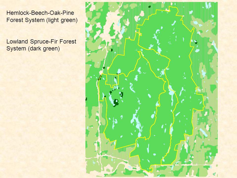 Hemlock-Beech-Oak-Pine Forest System (light green) Lowland Spruce-Fir Forest System (dark green) Old-growth Patches (red)