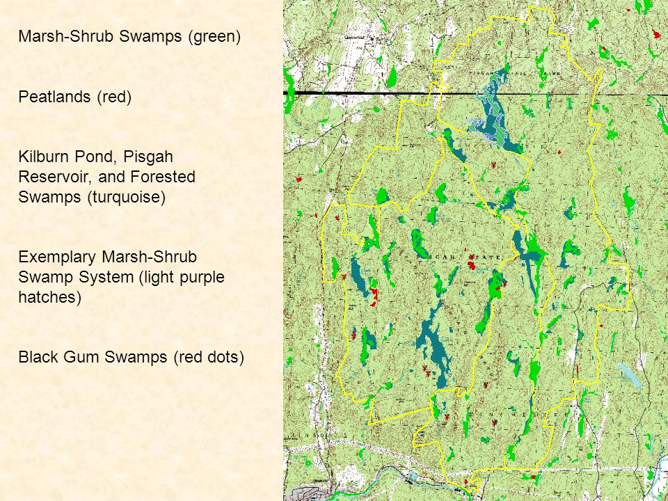 Marsh-Shrub Swamps (green) Peatlands (red) Kilburn Pond, Pisgah Reservoir, and Forested Swamps (turquoise) Exemplary Marsh-Shrub Swamp System (light purple hatches) Black Gum Swamps (red dots)