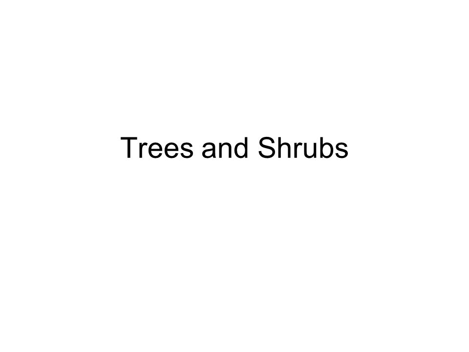 Trees and Woody Shrubs By Brad Parkinson Trees and Shrubs