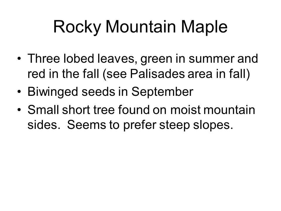 Rocky Mountain Maple Three lobed leaves, green in summer and red in the fall (see Palisades area in fall) Biwinged seeds in September Small short tree found on moist mountain sides.