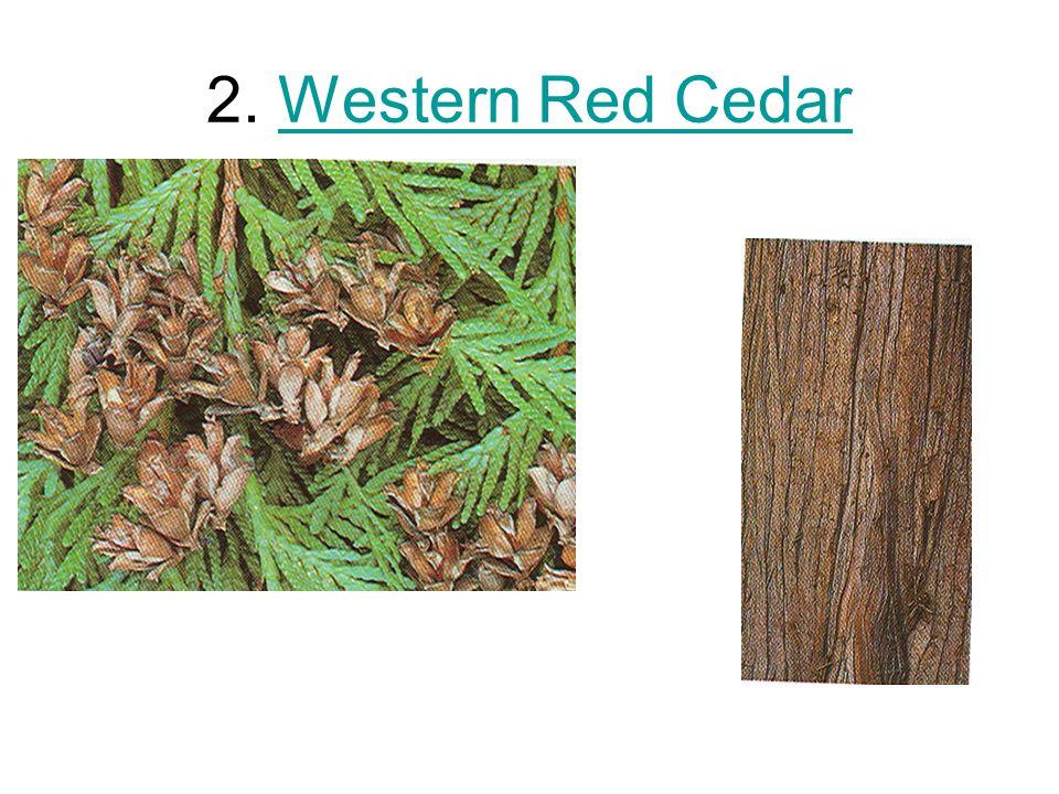 2. Western Red CedarWestern Red Cedar