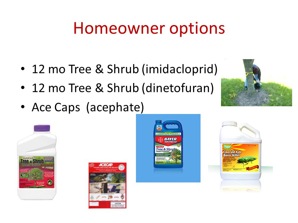 Homeowner options 12 mo Tree & Shrub (imidacloprid) 12 mo Tree & Shrub (dinetofuran) Ace Caps (acephate)