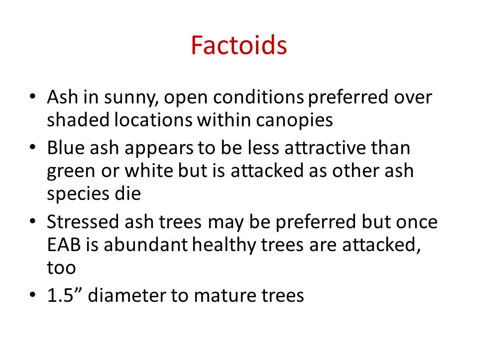 Factoids Ash in sunny, open conditions preferred over shaded locations within canopies Blue ash appears to be less attractive than green or white but is attacked as other ash species die Stressed ash trees may be preferred but once EAB is abundant healthy trees are attacked, too 1.5 diameter to mature trees