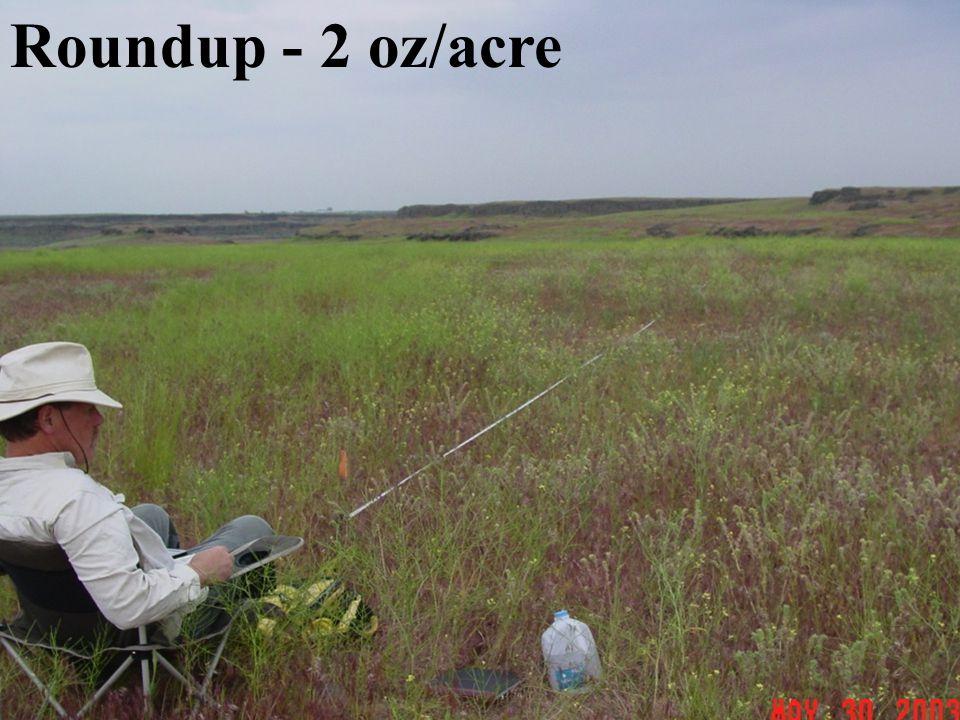 Roundup - 2 oz/acre