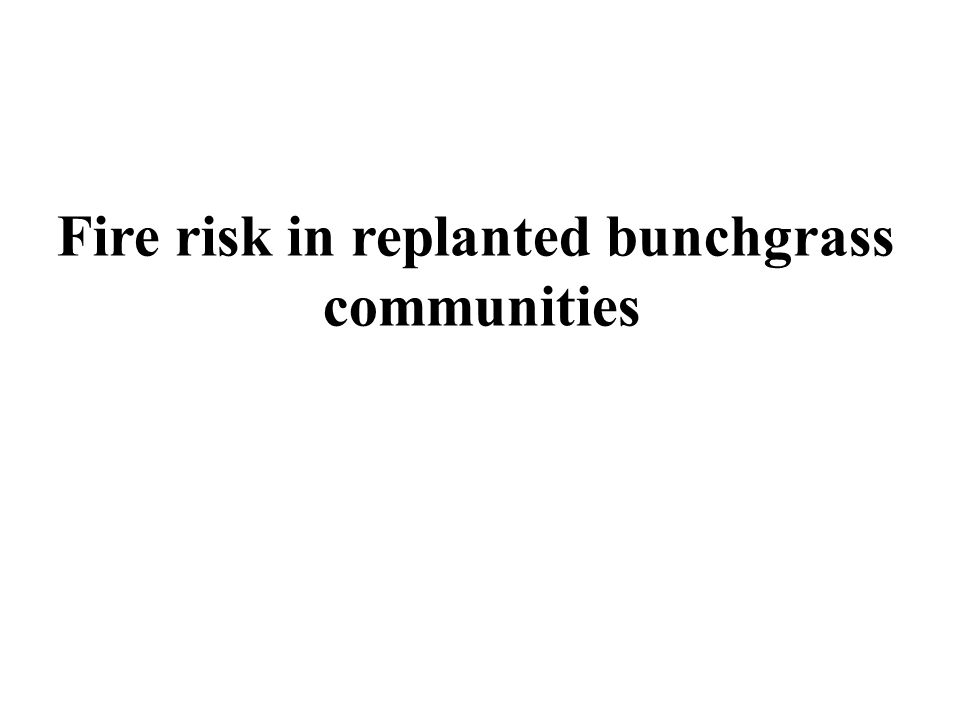 Fire risk in replanted bunchgrass communities