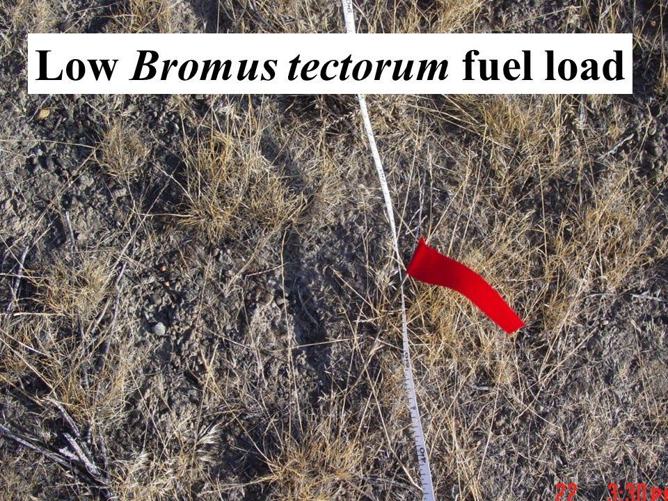 Low Bromus tectorum fuel load