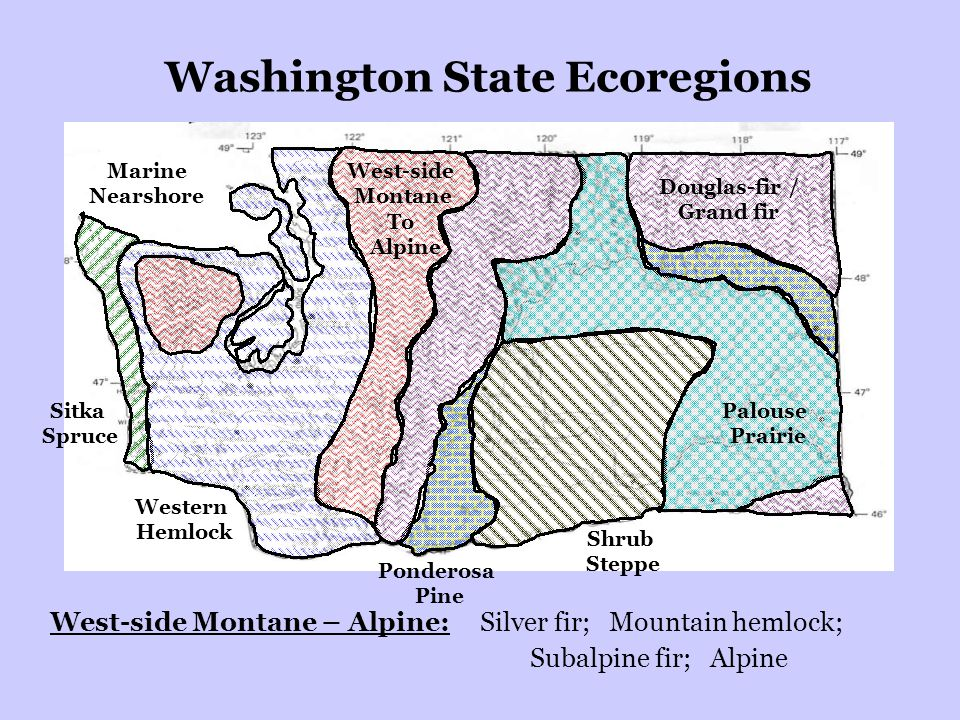Washington State Ecoregions Sitka Spruce Western Hemlock Palouse Prairie Douglas-fir / Grand fir West-side Montane To Alpine Ponderosa Pine Shrub Steppe West-side Montane – Alpine: Silver fir; Mountain hemlock; Subalpine fir; Alpine Marine Nearshore
