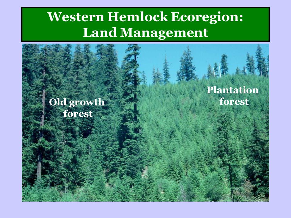 Western Hemlock Ecoregion: Land Management Plantation forest Old growth forest