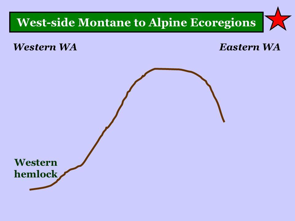 West-side Montane to Alpine Ecoregions Western WAEastern WA Western hemlock