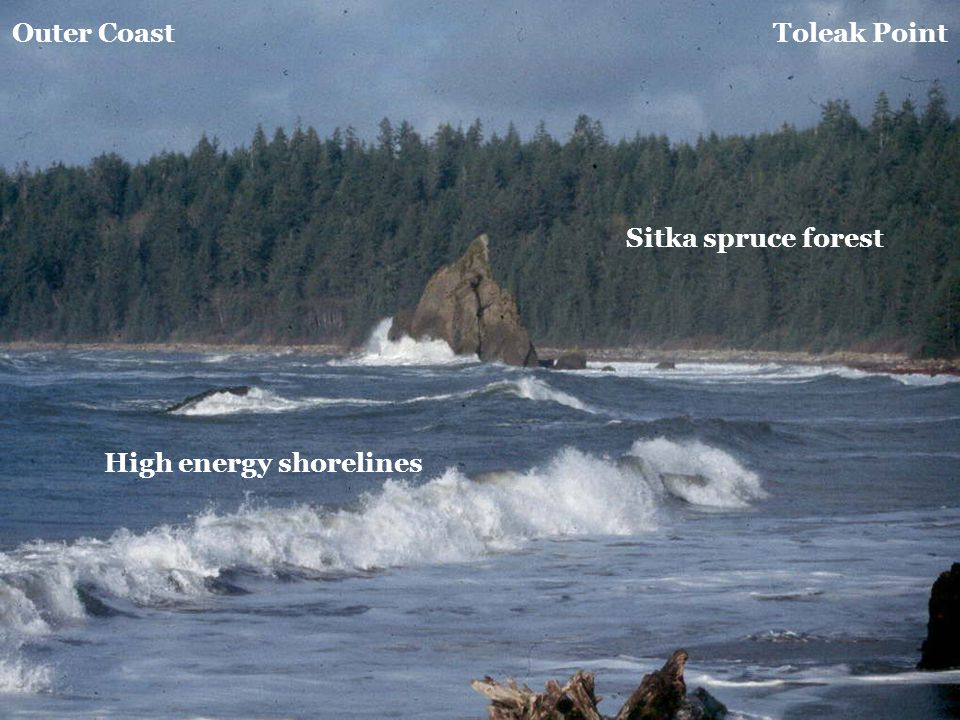 Outer Coast Toleak Point Sitka spruce forest High energy shorelines