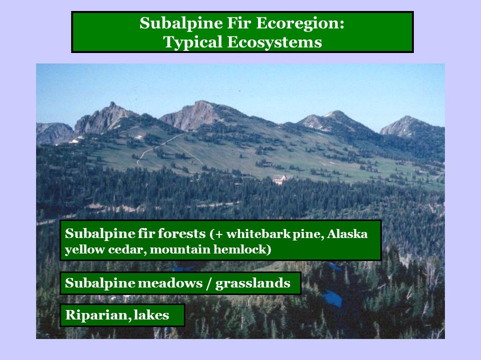 Subalpine Fir Ecoregion: Typical Ecosystems Subalpine fir forests (+ whitebark pine, Alaska yellow cedar, mountain hemlock) Subalpine meadows / grasslands Riparian, lakes