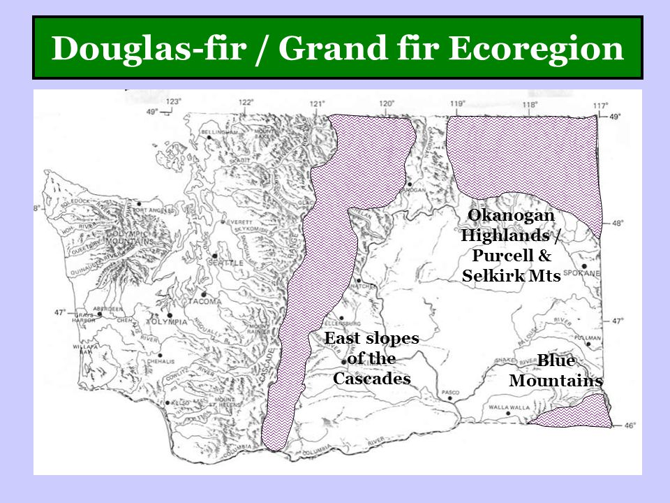 Douglas-fir / Grand fir Ecoregion East slopes of the Cascades Okanogan Highlands / Purcell & Selkirk Mts Blue Mountains