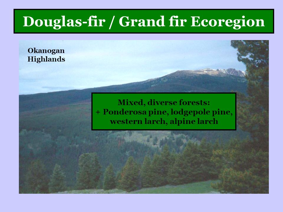 Douglas-fir / Grand fir Ecoregion Okanogan Highlands Mixed, diverse forests: + Ponderosa pine, lodgepole pine, western larch, alpine larch