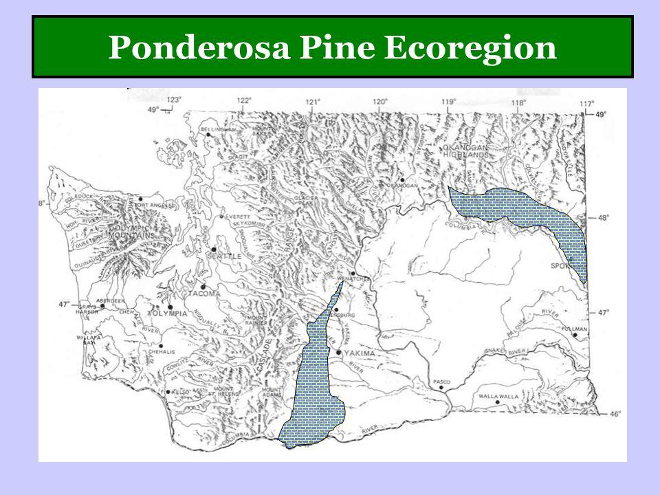Ponderosa Pine Ecoregion