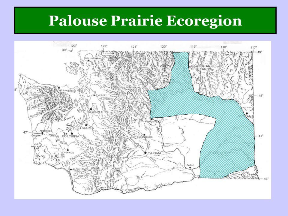 Palouse Prairie Ecoregion
