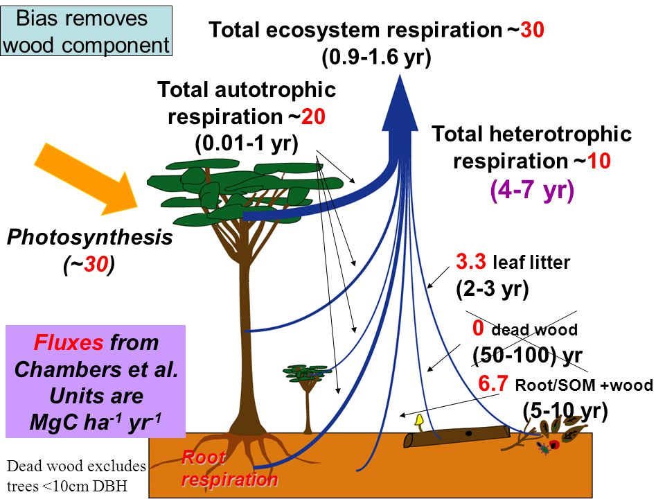 0 dead wood (50-100) yr Total heterotrophic respiration ~10 (4-7 yr) Total autotrophic respiration ~20 (0.01-1 yr) Total ecosystem respiration ~30 (0.9-1.6 yr) 3.3 leaf litter (2-3 yr) 6.7 Root/SOM +wood (5-10 yr) Photosynthesis (~30) Rootrespiration Fluxes from Chambers et al.