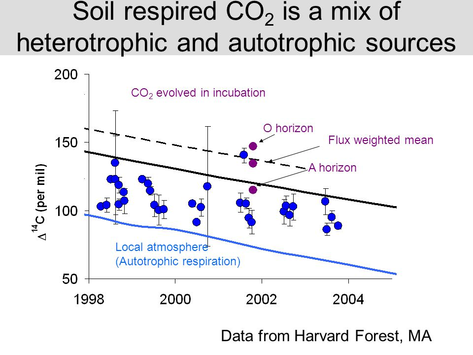 Local atmosphere (Autotrophic respiration) Soil respired CO 2 is a mix of heterotrophic and autotrophic sources O horizon A horizon CO 2 evolved in in