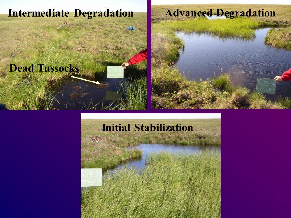 Intermediate Degradation Dead Tussocks Advanced Degradation Initial Stabilization