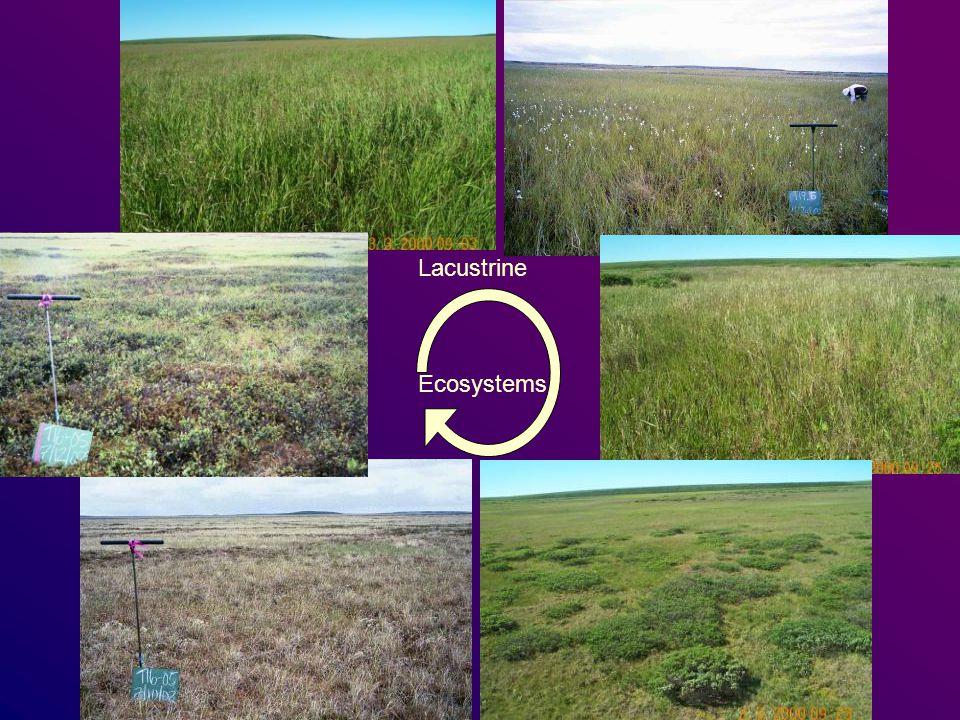 Lacustrine Ecosystems