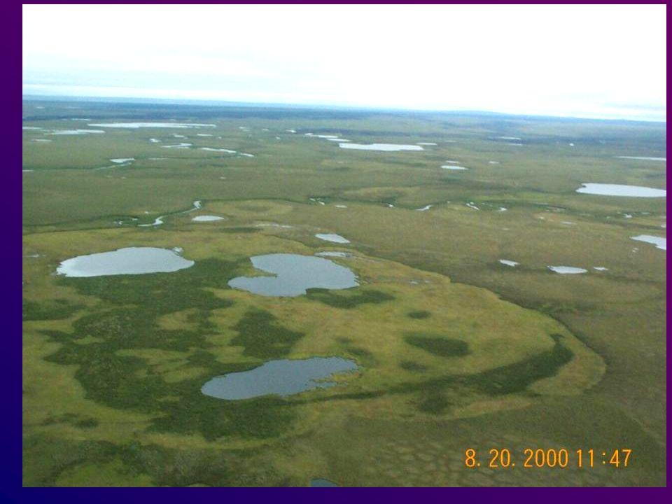 Lower Noatak Lowlands