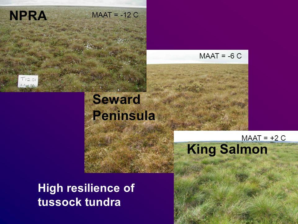 NPRA Seward Peninsula King Salmon High resilience of tussock tundra MAAT = -12 C MAAT = -6 C MAAT = +2 C