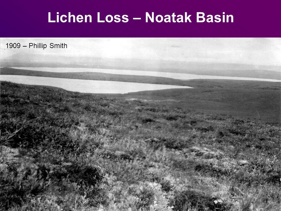 Lichen Loss – Noatak Basin 1909 – Phillip Smith