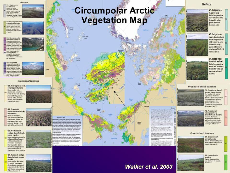 Circumpolar Arctic Vegetation Map Walker et al. 2003