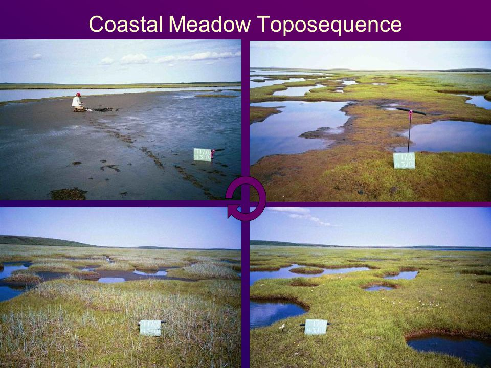 Coastal Meadow Toposequence