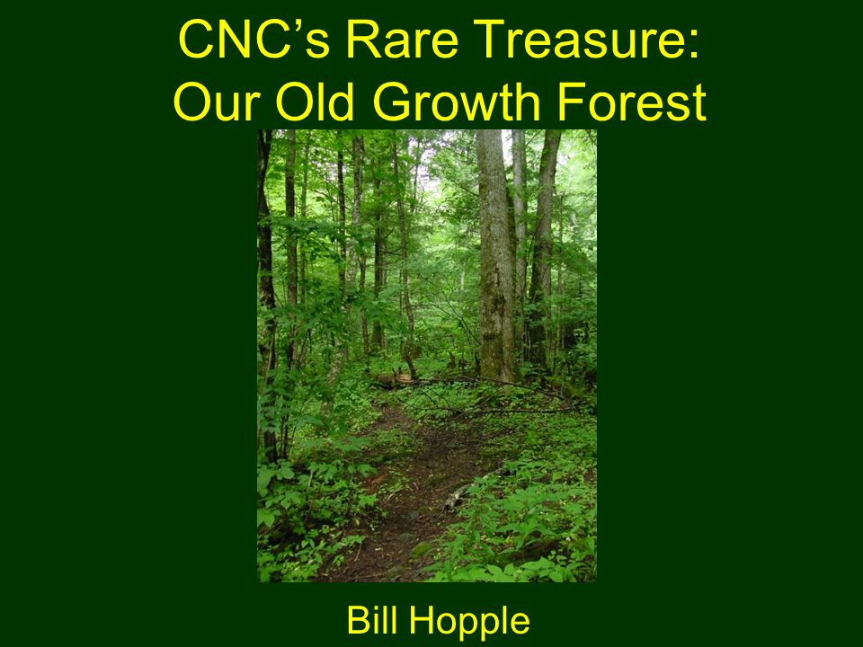CNC's Rare Treasure: Our Old Growth Forest Bill Hopple