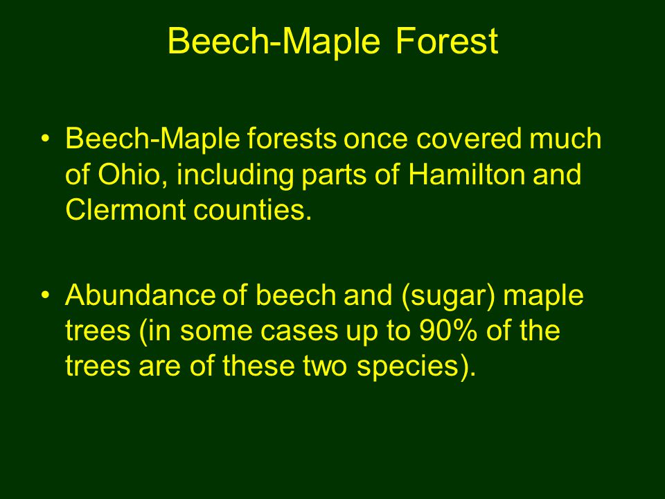 Beech-Maple Forest Beech-Maple forests once covered much of Ohio, including parts of Hamilton and Clermont counties.