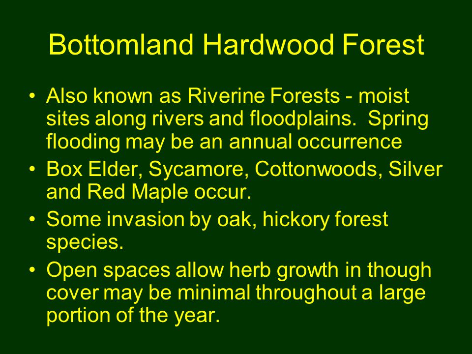 Bottomland Hardwood Forest Also known as Riverine Forests - moist sites along rivers and floodplains.