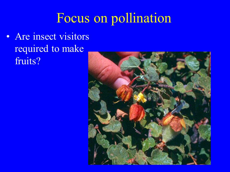 Focus on pollination Are insect visitors required to make fruits?