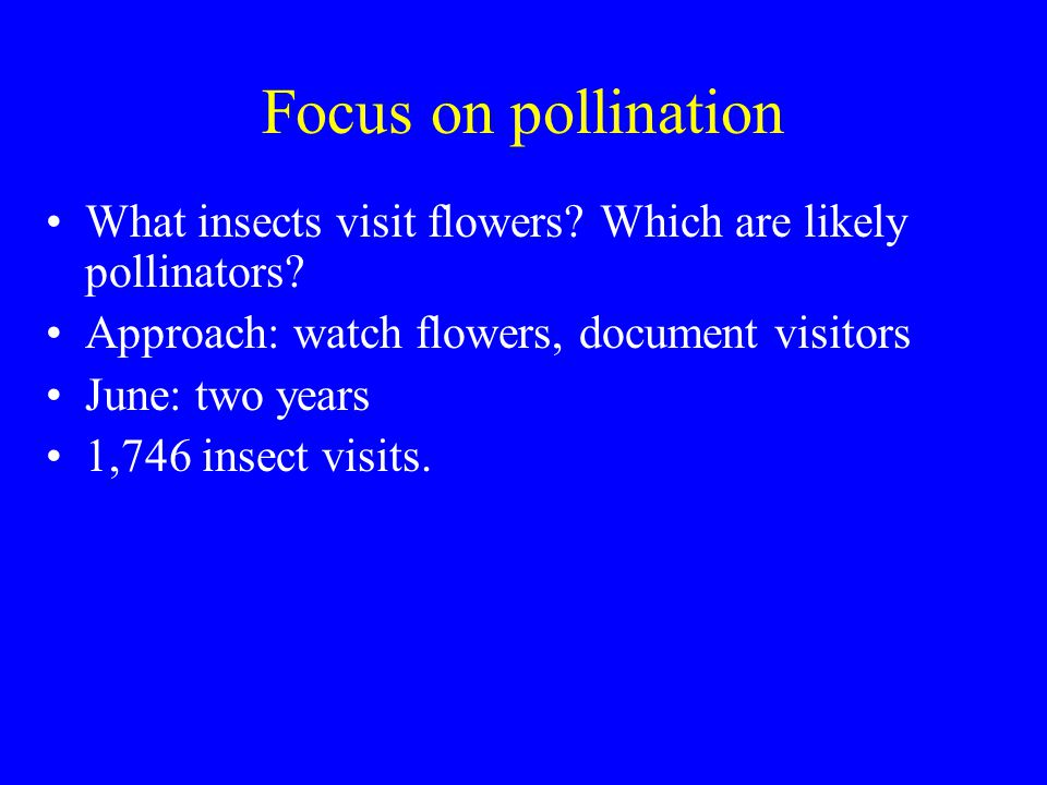 Focus on pollination What insects visit flowers. Which are likely pollinators.
