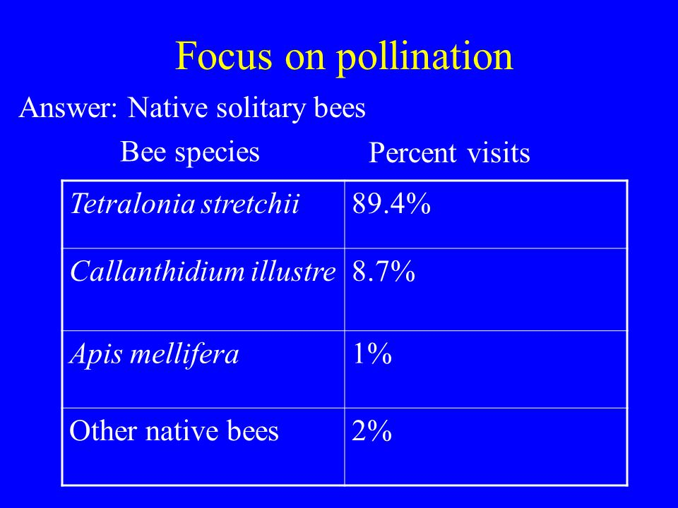 Focus on pollination Tetralonia stretchii89.4% Callanthidium illustre8.7% Apis mellifera1% Other native bees2% Bee species Percent visits Answer: Native solitary bees