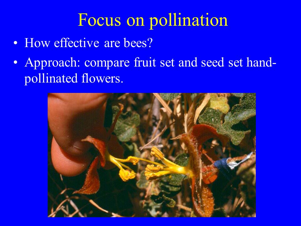 Focus on pollination How effective are bees.