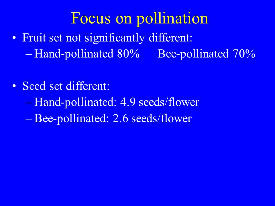 Focus on pollination Fruit set not significantly different: –Hand-pollinated 80% Bee-pollinated 70% Seed set different: –Hand-pollinated: 4.9 seeds/flower –Bee-pollinated: 2.6 seeds/flower