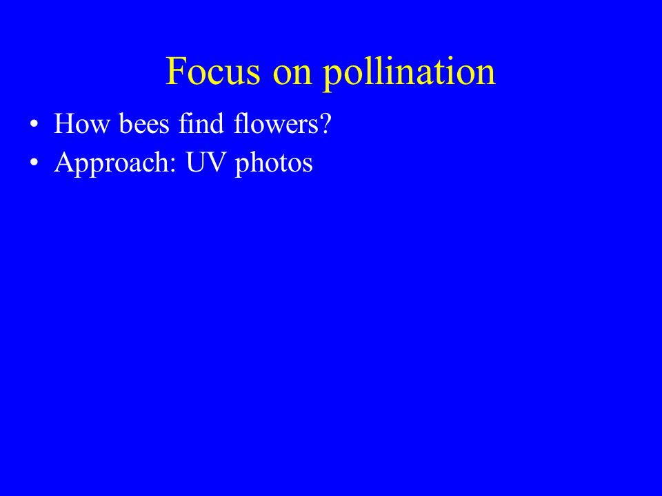 Focus on pollination How bees find flowers? Approach: UV photos