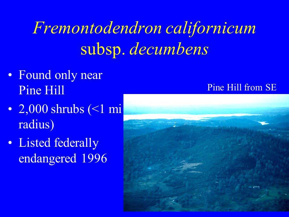 Fremontodendron californicum subsp.